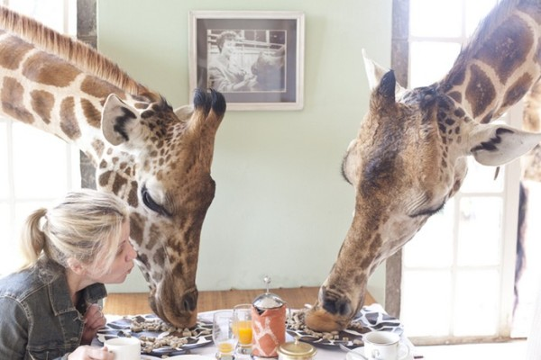 giraffe manor 4