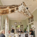Хотел Giraffe Manor в Найроби или как да споделиш закуската си с 8 жирафа