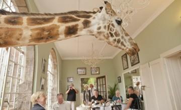 giraffe manor 5