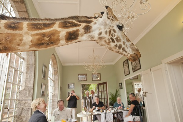 giraffe manor 5