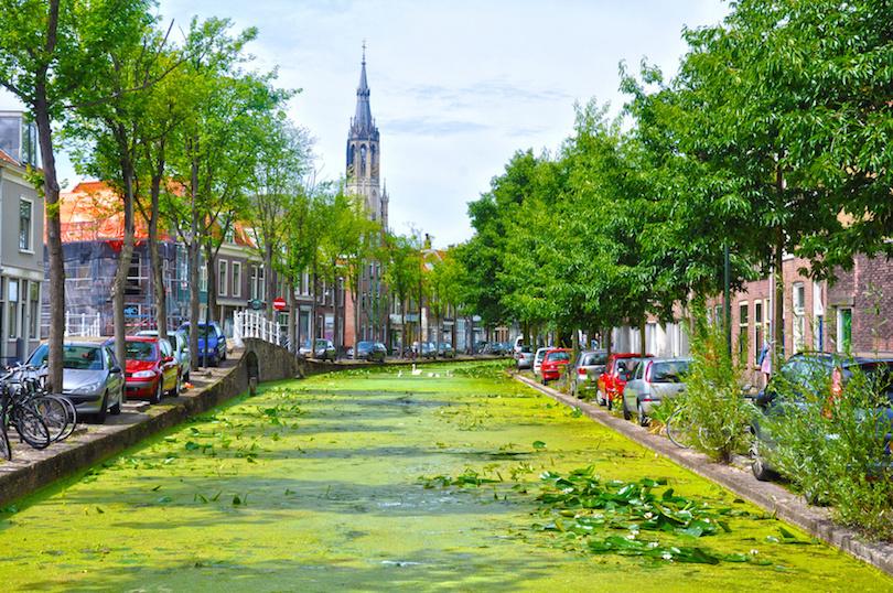 Canal con nenfares en Delft, Holanda, plantas acuticas