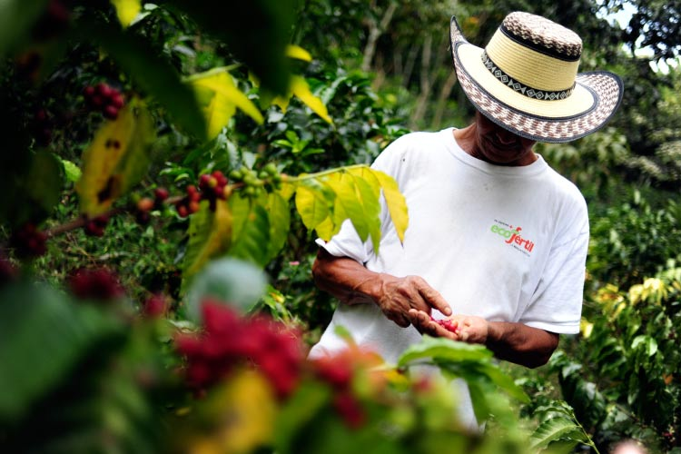 4coffee-farmer-inspects-his-crop-in-colombias-southwestern-cauca-department