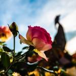 Къде да прекарате Цветница цветно