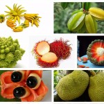 20 от най-странните плодове и зеленчуци, които можете да опитате по света