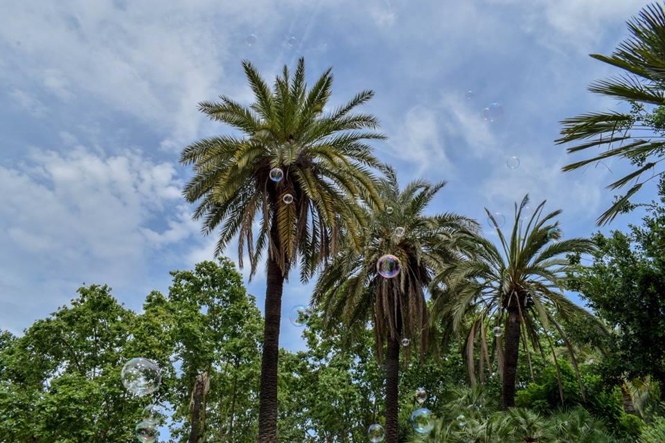 палми, Барселона
