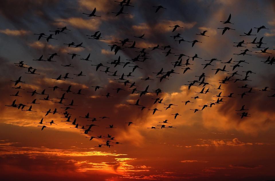 испания, доняна парк, птици, ято