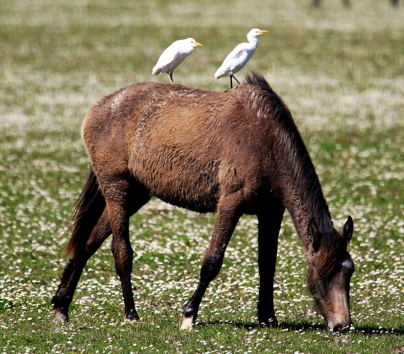 доняна парк, испания, кон, птици