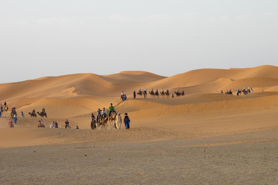 12 - camel