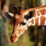 Най-впечатляващите зоопаркове в света